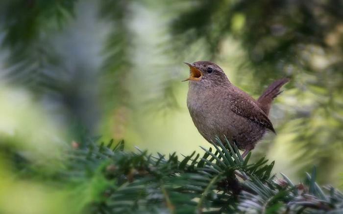 Парень решил заговорить с птичкой. Но он и представить себе не мог, что услышит в ответ!